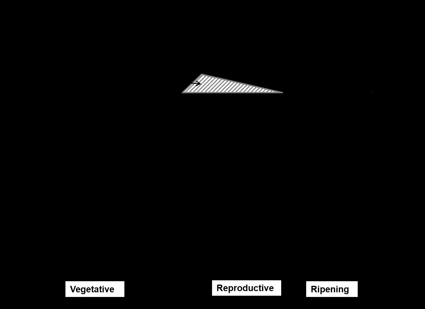 Life Cycle of the Rice Plant   Yara Ghana